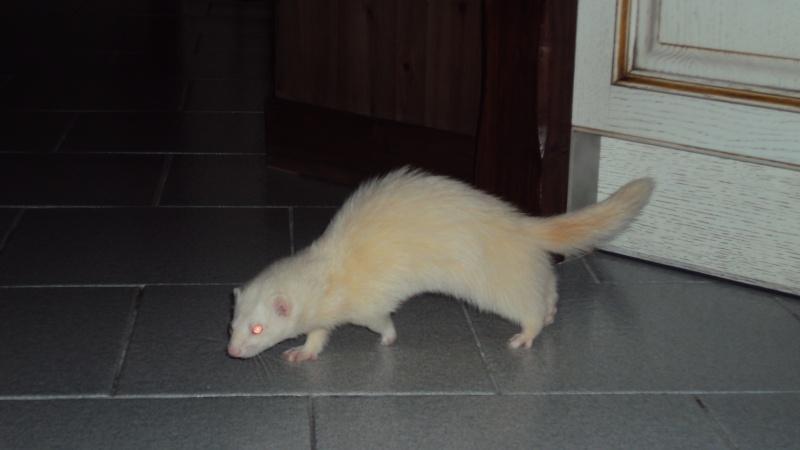 Pinkie, femelle albinos - Page 4 Dsc00013