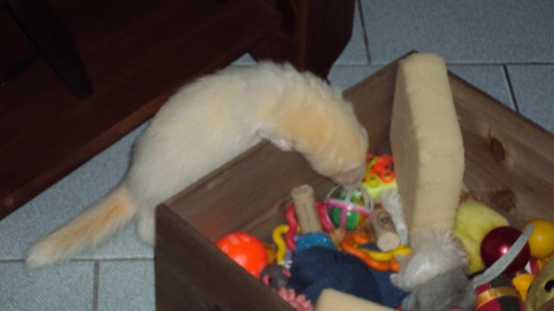 Pinkie, femelle albinos - Page 4 Dsc00015