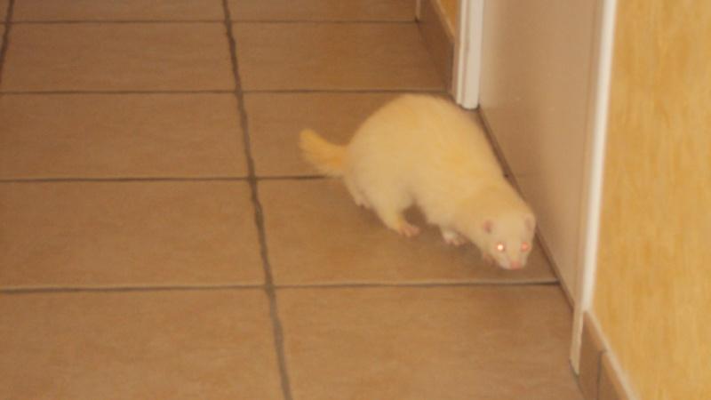 Pinkie, femelle albinos - Page 4 Dsc00017