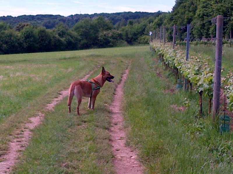 Ballades canines secteur Thionville Img-2012