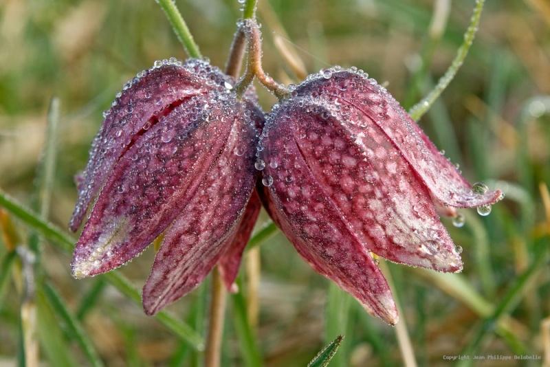 Une fleur - Cathy - 8 Décembre - trouvée par Martine. 36e36e10