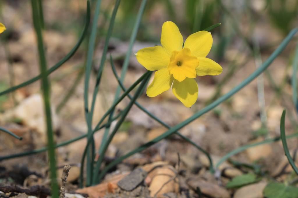 Narcissus 2021 Narcis29