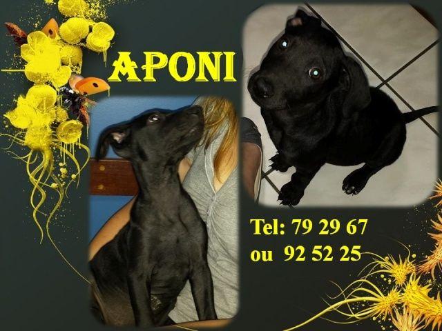APONI 2 mois Aponi10