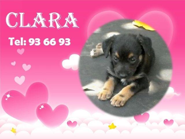 CLARA 1 mois et demi Clara10