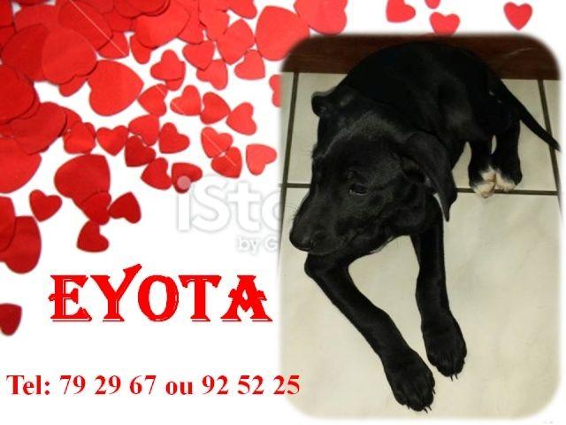 EYOTA 2 mois Eyota10