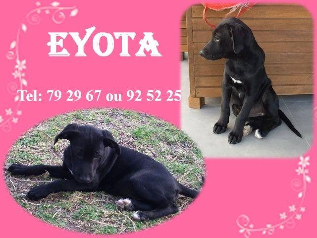 EYOTA 2 mois Eyotab10