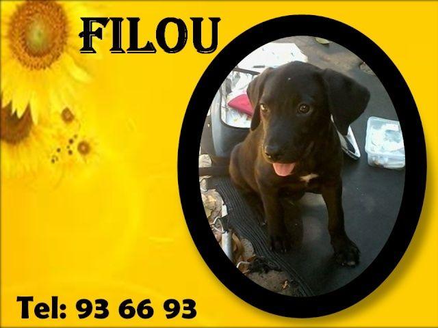 FILOU 3 mois Filou10