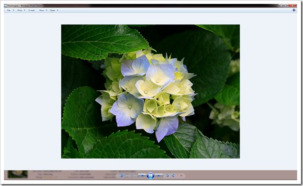 How To Fix Windows Photo Viewer Displaying Yellow Or Orange Tint For White and Transparent Images 620x3810