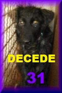- FOURRIERE DE BACKA : NOUS DEVONS SAUVER LES CHIENS! 1 - Page 20 31_dcd10