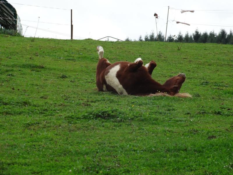 INDIANA - ONC poney typée shetland présumée née en 2000 - adoptée en juillet 2013 - Page 3 Dsc00110