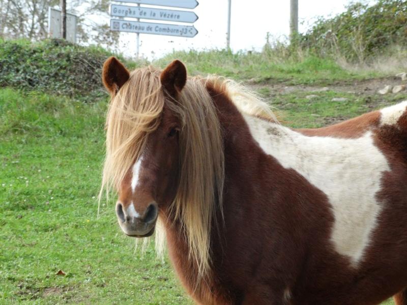 INDIANA - ONC poney typée shetland présumée née en 2000 - adoptée en juillet 2013 - Page 3 Dsc00210
