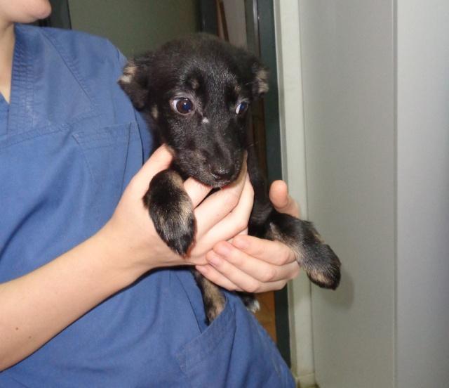 CLOCHETTE (ex-NEPTUNE), chiot femelle x teckel, née env août 2014 (Pascani/Carmina) - adoptée par caradjihaiizia (depart68) - Page 2 Puppie18