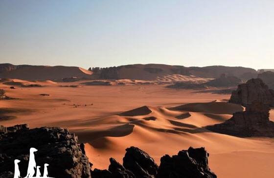 ALGERIE - Raid en Algérie  Decor10