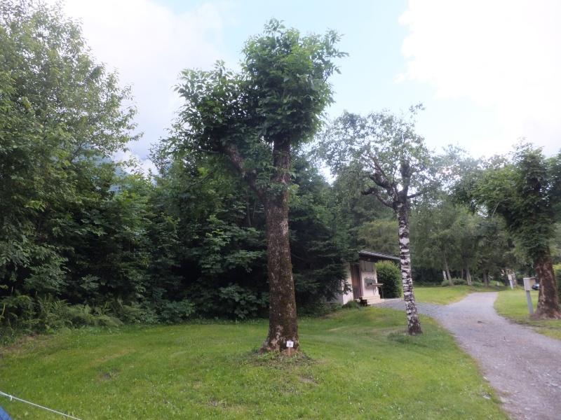 Les arbres Dscf9210