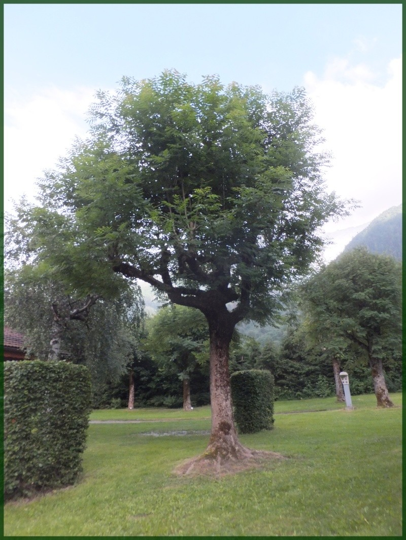 Les arbres Dscf9211