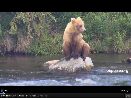 Wildtier-Livecams - Seite 4 Byr_1410