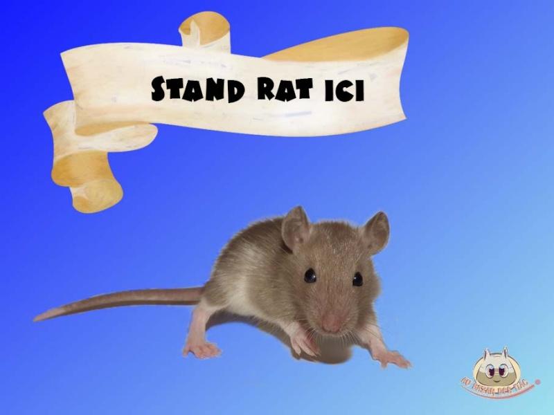 Besoin de photo de vos rats pour mon dossier ! Art_vi10