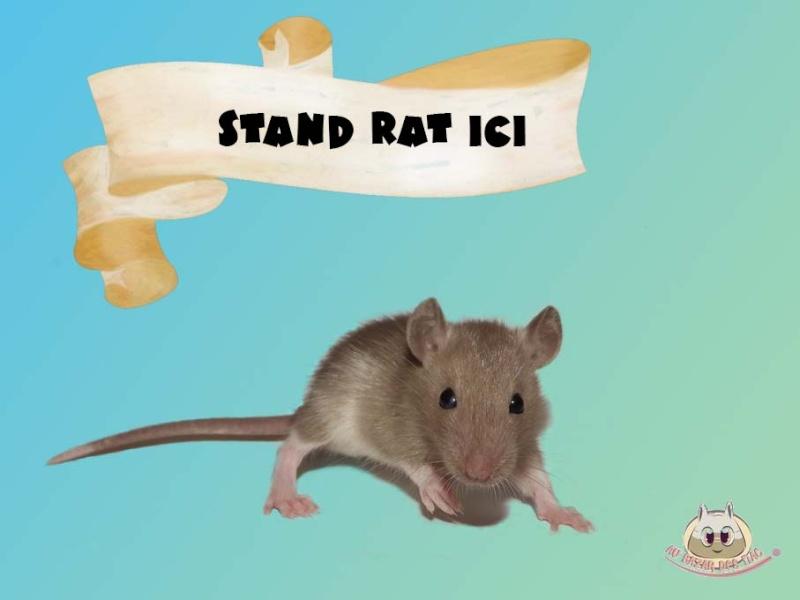 Besoin de photo de vos rats pour mon dossier ! Art_vi11