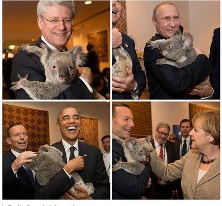 Le blabla des actualités - Page 3 Koala10