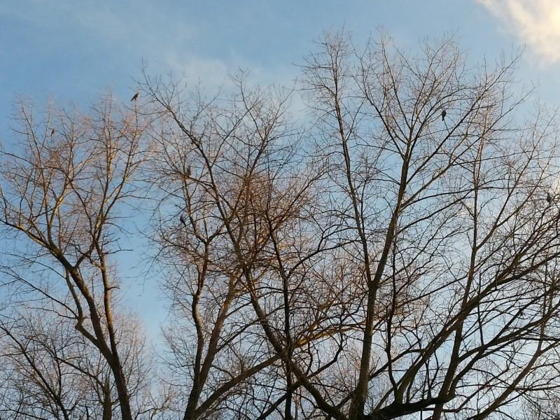 Placer des formes de pigeons dans les arbres 2014-110