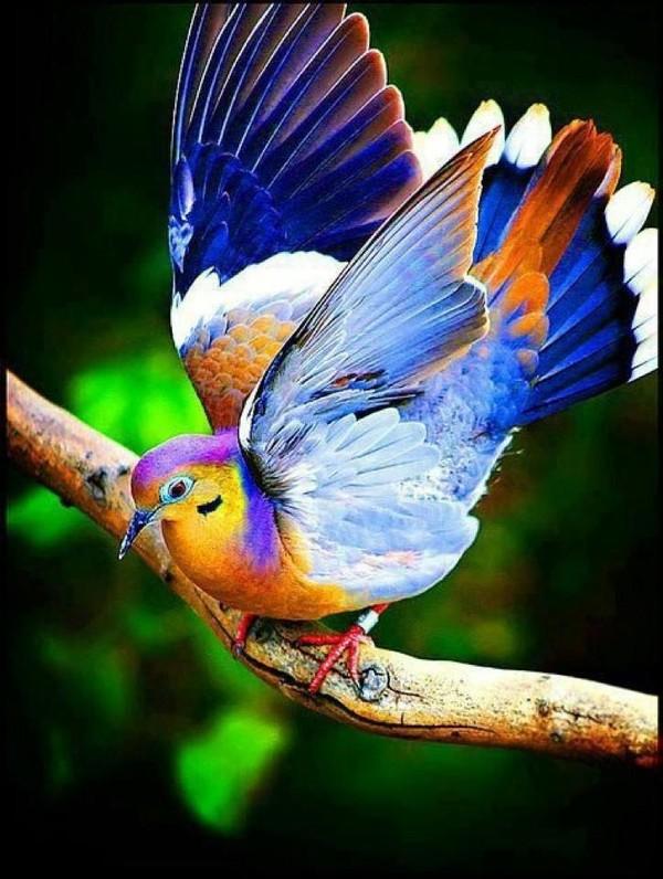 Le petit oiseau de toutes les couleurs Oiseau10