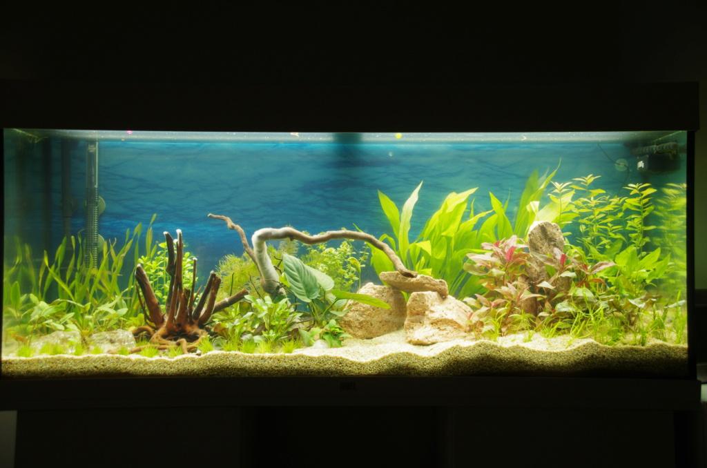 L'aquarium de mon retour 21-03-10