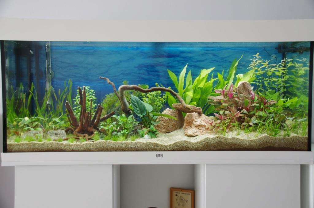 L'aquarium de mon retour 25-03-10