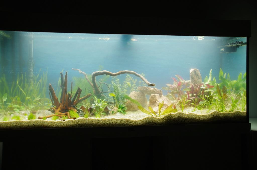 L'aquarium de mon retour Imgp6310
