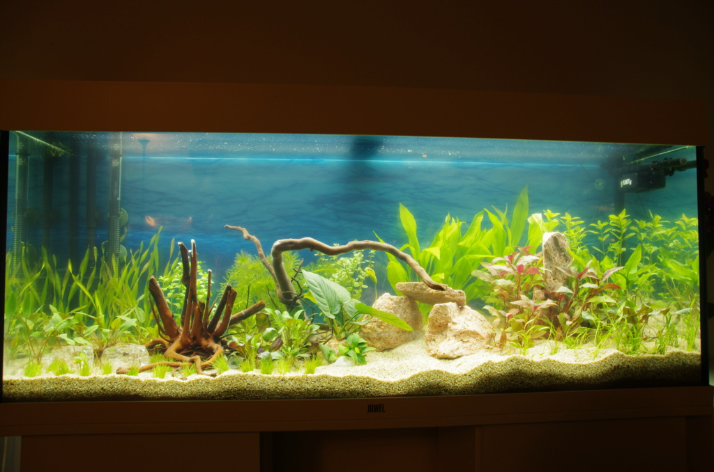L'aquarium de mon retour Imgp6312