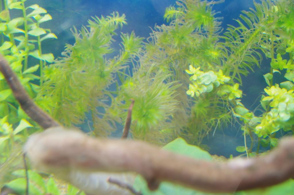 L'aquarium de mon retour Imgp6410
