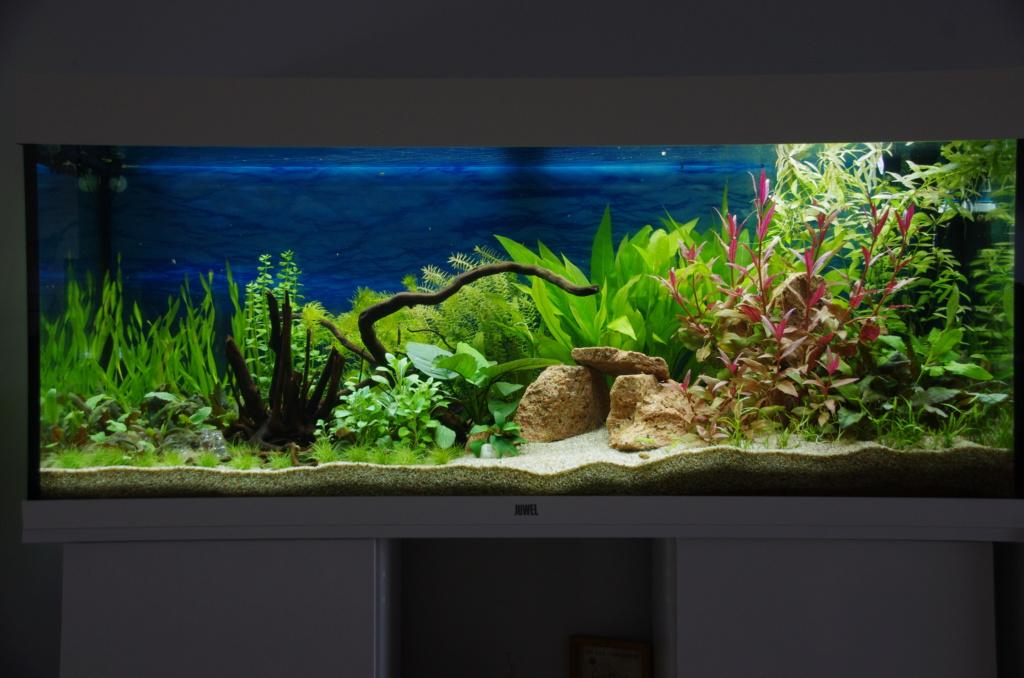 L'aquarium de mon retour - Page 2 Imgp6415
