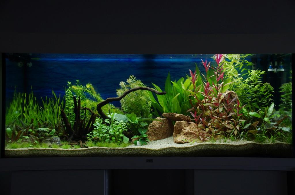 L'aquarium de mon retour - Page 2 Imgp6418
