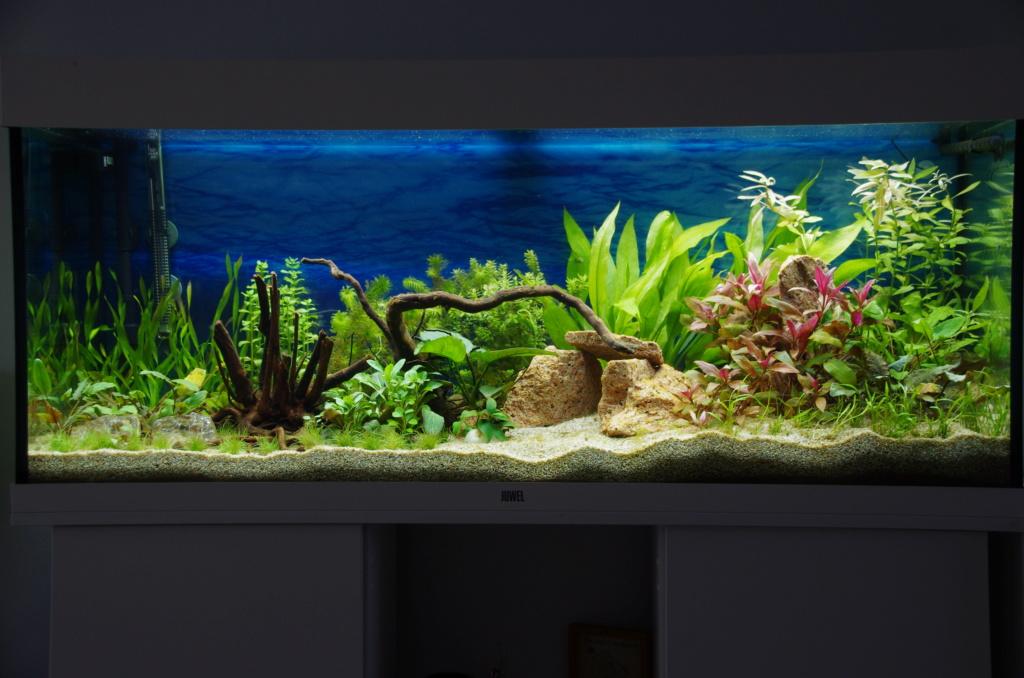 L'aquarium de mon retour - Page 2 J18_0110