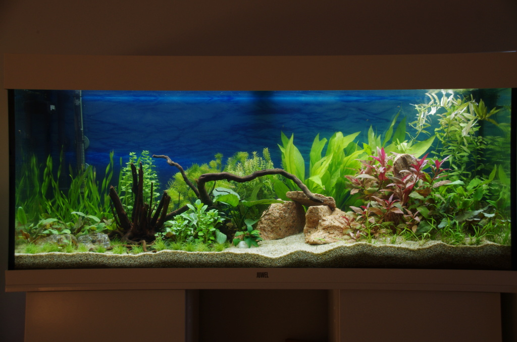 L'aquarium de mon retour - Page 2 J25_0810