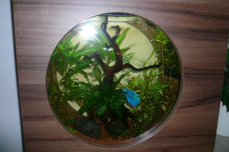 Débutant - autonomie d'un aquarium ? - Page 2 Olyron30