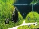 Les aquariums d'eau douce