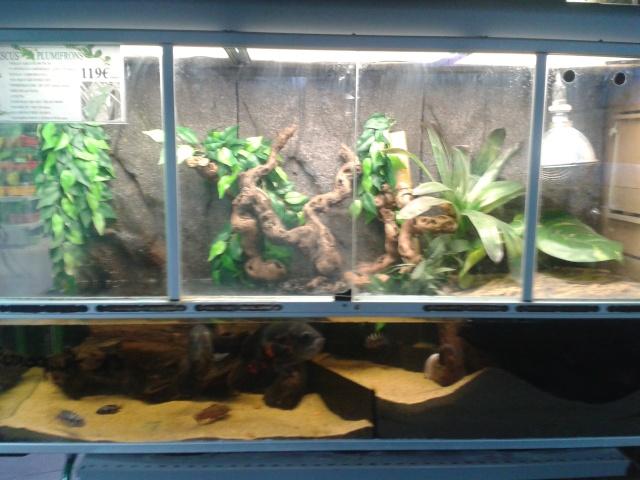 aquaterrarium 2014-110