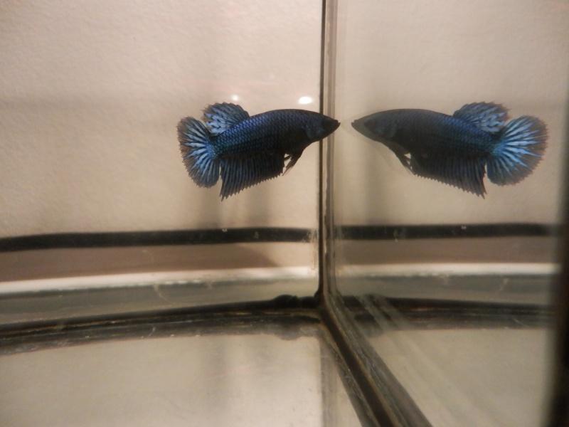 Male marbré + femelle marbré  - Page 2 Pb290110