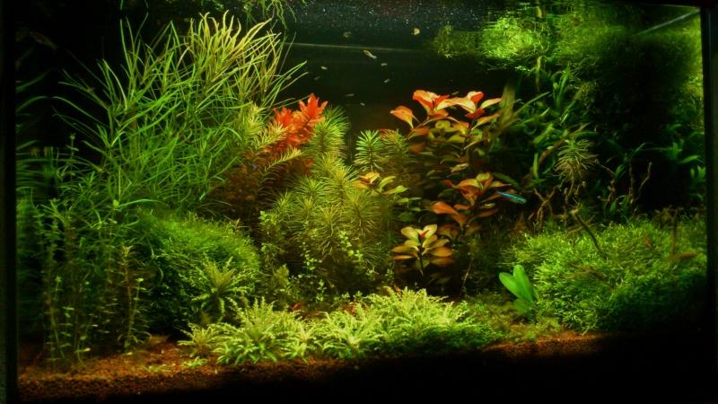 aquarium 54litres planté - Page 5 04710