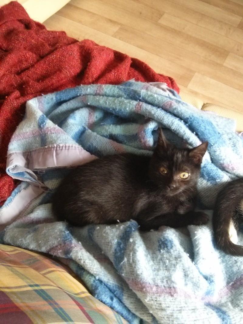 jasper - Jasper, chaton de type européen noir, né le 06/09/2014 en sauvetage! Img_2025