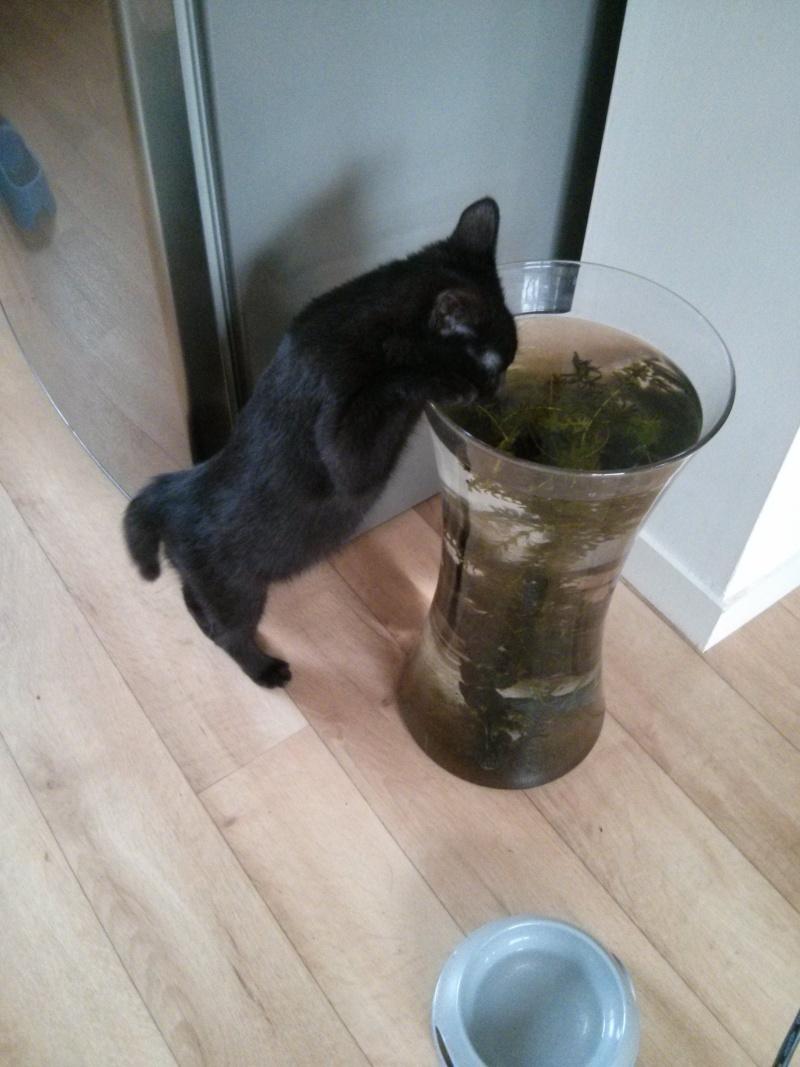 jasper - Jasper, chaton de type européen noir, né le 06/09/2014 en sauvetage! Img_2042