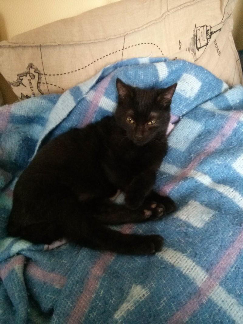 jasper - Jasper, chaton de type européen noir, né le 06/09/2014 en sauvetage! Img_2043
