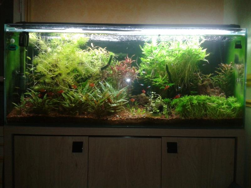 240 litres très planté  (j 'ai des algues) - Page 8 2014-111
