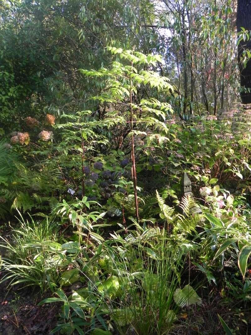 Dahlia imperialis - Page 3 Dscn7616