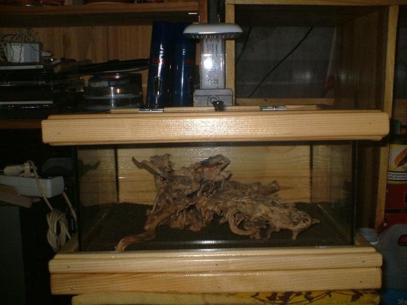petit nouveaux dans la famille aquarium Dscf0016