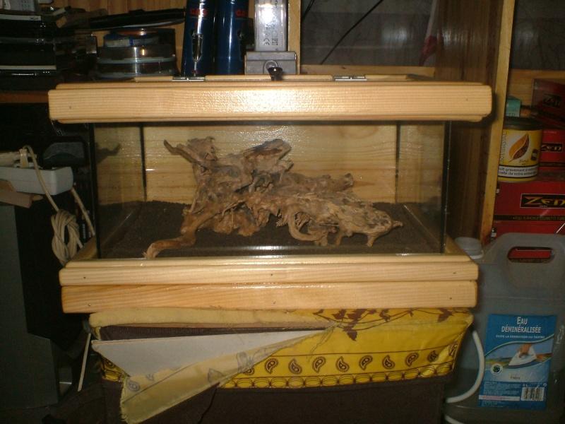 petit nouveaux dans la famille aquarium Dscf0017