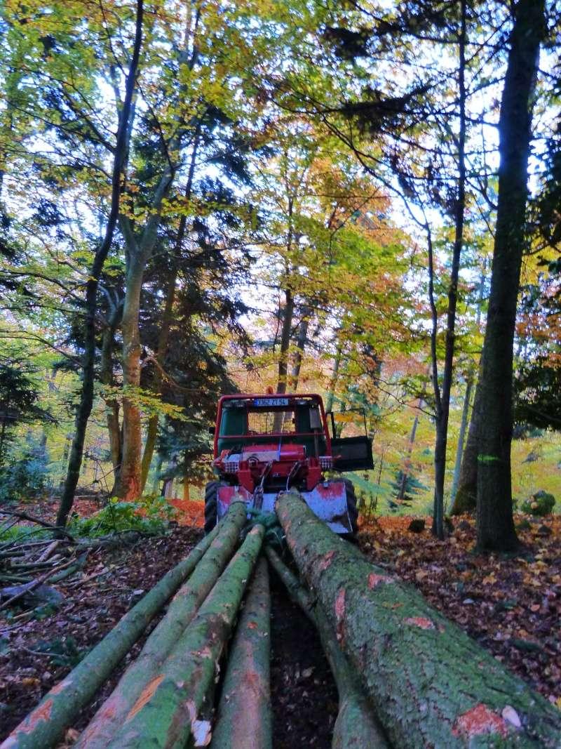 modification en forestier - Page 9 P1040012