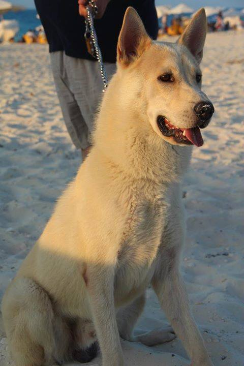 is it a husky ?? plz help 10417710