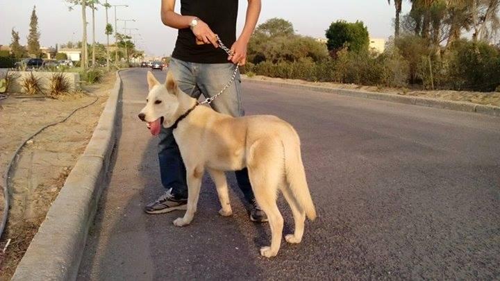 is it a husky ?? plz help 10646611