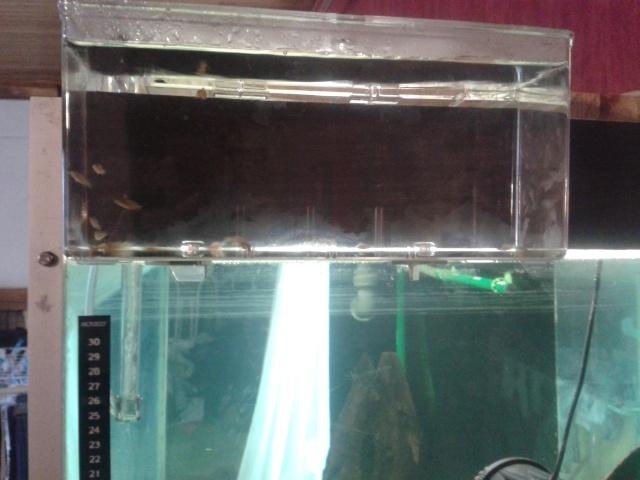 breeding box 2l 20141121